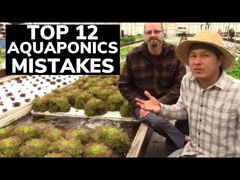 Top 12 Mistakes in Aquaponics Systems & How to Avoid them