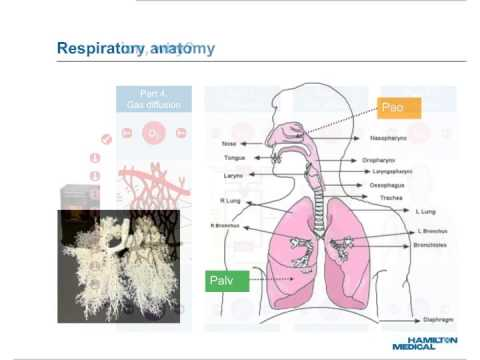 e-Learning: Lung ventilation, natural and mechanical