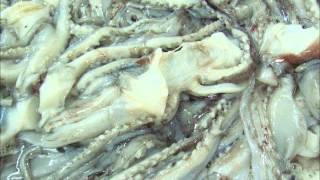 CHPL Seafood Holding - frozen giant squid process video