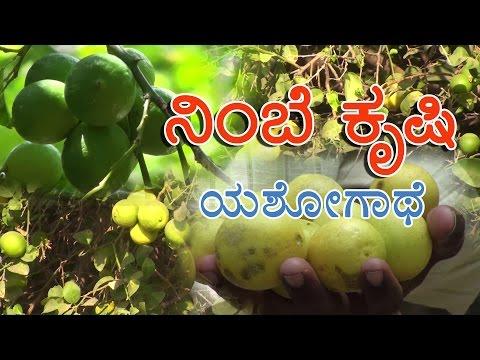Acid lime cultivation a success story in Kannada