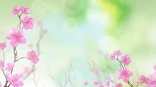Футаж - фон Нежные Цветы скачать бесплатно
