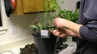 Making a small Jacaranda planter
