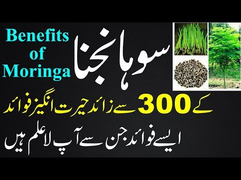 sohanjna ke fayde | Moringa Oleifera Benefits And Side Effects | Health Benefits Of Moringa in urdu