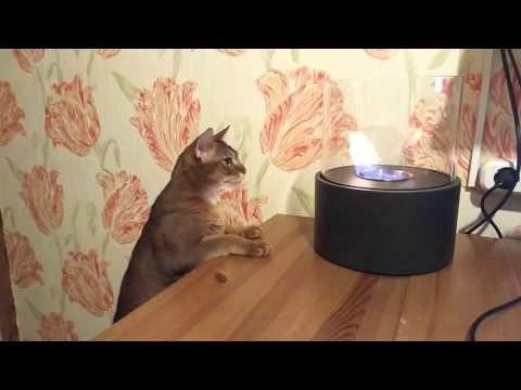 Вопрос: Кто из животных не боится огня Почему?