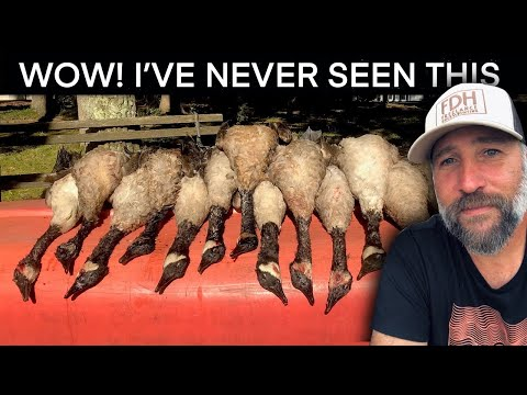 Early East Coast Goose Hunt: Virginia Outdoors Unlimited