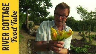 Deep Fried Courgette Flowers | Hugh Fearnley-whittingstall