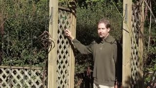 How To Landscape With A Lattice Trellis : Landscaping Basics