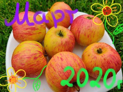 Обзор сортов яблони в марте, 2я часть. Оценка вкуса зимних и позднезимних сортов. Саженцы плодовых.