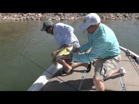 Monster Bass on Quail Creek Seg 4