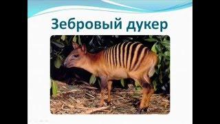 Удивительные животные нашей планеты  Часть2