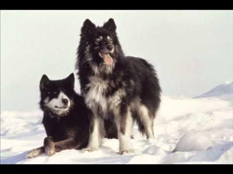 BO Antarctica (1983) - Les périls de l'Antarctique (Vangelis)