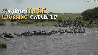 safariLIVE: Migration crossing catch-up July 19 2017