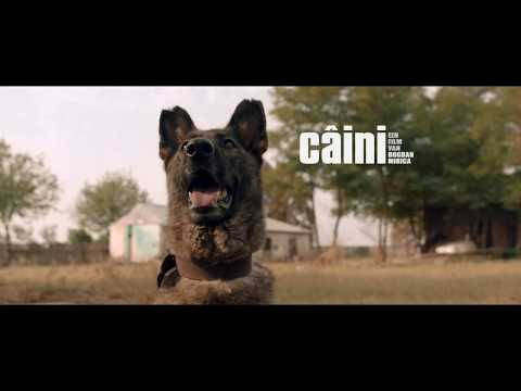 CAINI trailer CF streaming vf