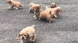 https://www.breeder-navi.jp/dog/64919 子犬販売ならブリーダーナビ|...