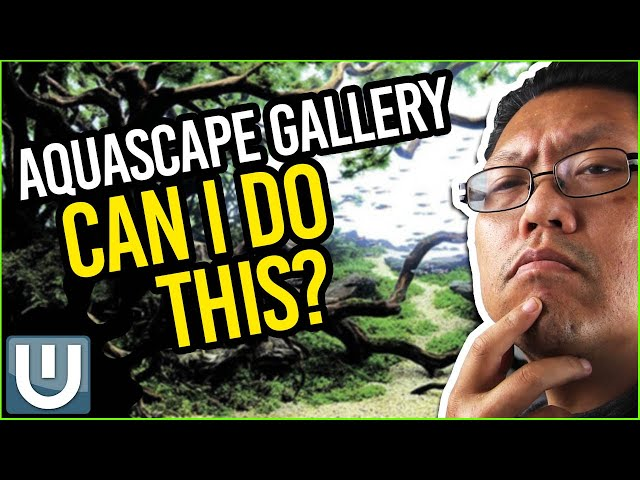 Need YOUR Aqua-Expert Advice! - Aquascape Gallery