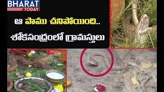 ఆ పాము చనిపోయింది | Durgada Snake Dies In East Godavari | Bharat Today