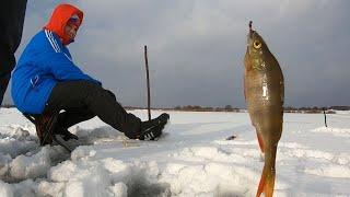 Учимся ловить окуня на мормышку Зимняя рыбалка на деревенском озере