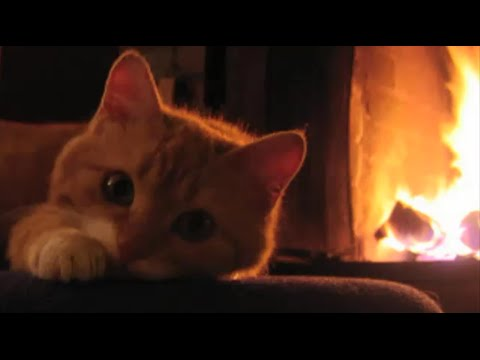 Relaxing Fireplace Crackling Purring Cat - Natural sounds - YouTube