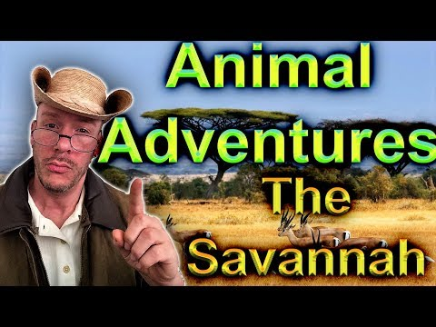Animal Adventures #2...The African Savanna
