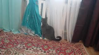 Кот стягивает полотенце с батареи