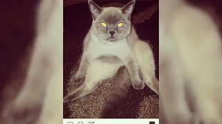 Шок😱!!!слайд-шоу фото моей кошки СТЕССИ❤️!!!