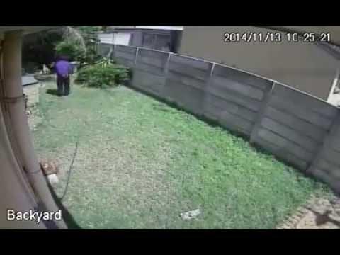Einbrecher VS Hund (Fun)