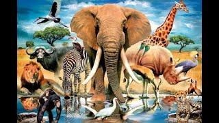 В мире животных 1