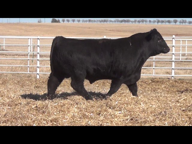 Express Ranches Lot 99