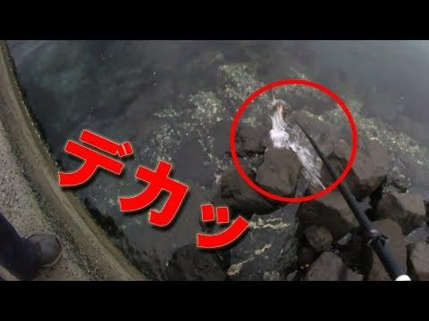 堤防釣りの人に大物が…!真似して投げたら釣れちゃった!!