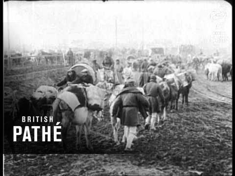 Greek Peasants Transport Supplies  (1916)
