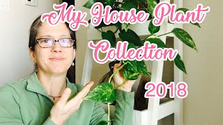 My House Plant Collection 2018