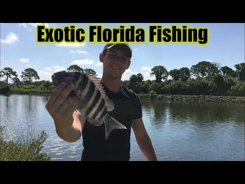 Fishing Multi-Species Intracoastal Florida