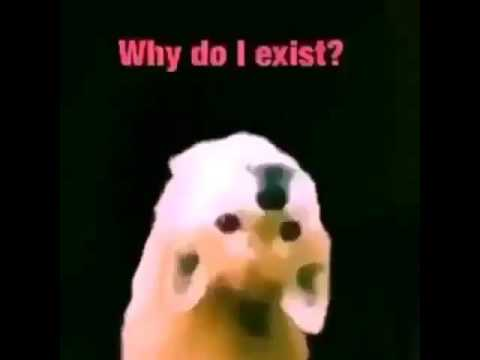 hqdefault dank meme dog youtube,Dank Memes Dog