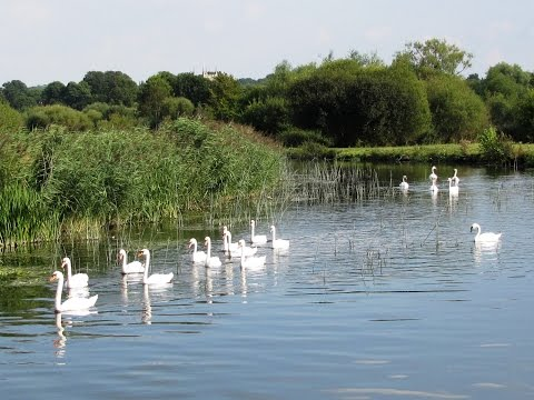Wiltshire Country Walk