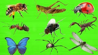 Learning Insects and Bugs for Kids. Animals Names in English. Learning videos for kids