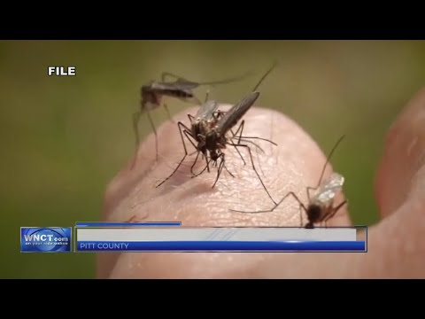 Florence Aftermath: Mosquitoes soar after storm's flooding in Pitt County