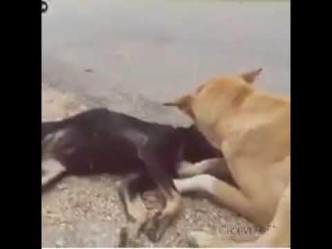 Yara Teri Yari Ko  Mene To Khuda Mana Best Video For Dog On Felling