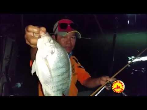 ๋ชิงหลิวไผ่เขียว เหยื่อตกปลาของเชียงรายฟิชชิ่ง ที่บ่อตกปลาอมยิ้ม