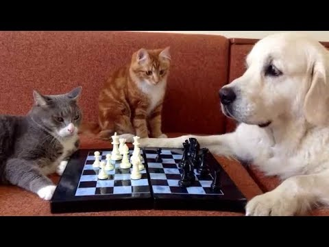 Funny Cats And Dogs - Dog Playing With Cat | World Pet TV