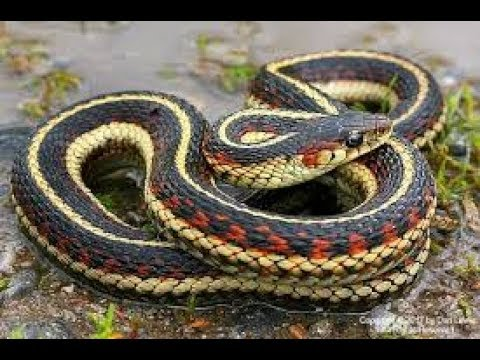 Snake Trap: How to remove small snakes from your yard ...