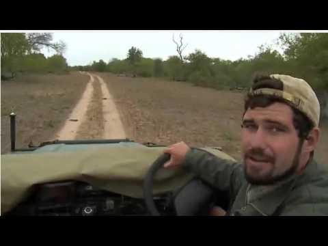 Jan 16 WildEarth Sunset SafariLIVE WIld Dogs (Part One)
