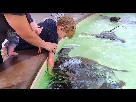 STING RAY BITES KIDS HAND AT SEAWORLD! 🐬🐳🐋😱