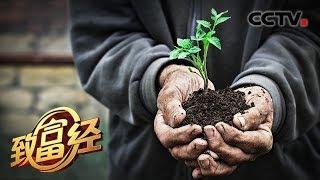 《致富经》 20190826 78岁老人和他的梦| CCTV农业