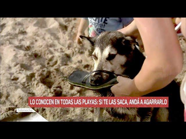 El perro roba ojotas: si te las saca, andá a agarrarlo
