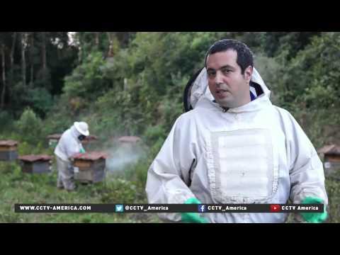 Organic honey in Brazil increases in popularity