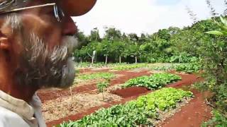 Master Gardeners of Paradise a proposed documentary film by Darrel Jarmusch