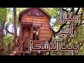 منزل الشجرة أجمل بيت في الغابة ؟!