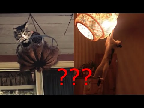 Cats Are JERKS! - Funny Cats Compilation 2020