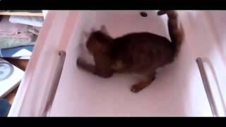 Маленький кот грызет большой банан и  другие кошки приколы 724227
