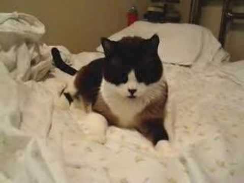 Cat Helps Make Bed